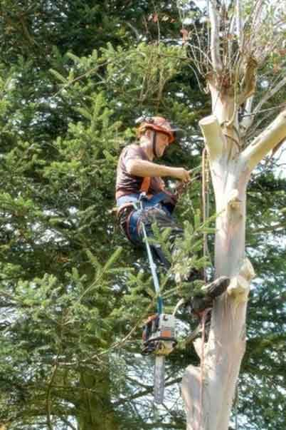 Elite Tree Service Tree Remvoal