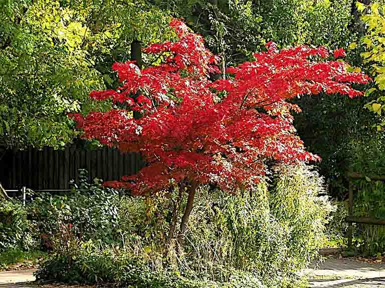 Portland Tree Pruning