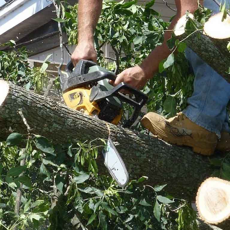 Safe Tree Removal Gresham
