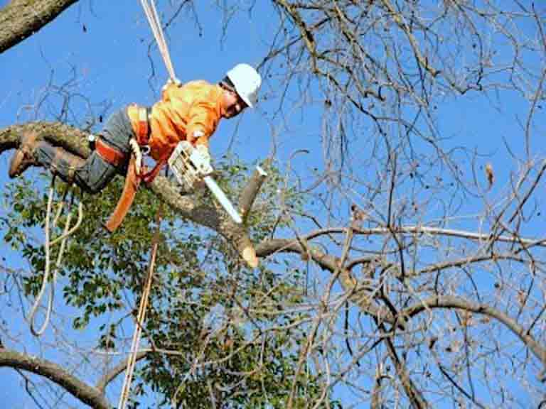 Damaged Tree Services