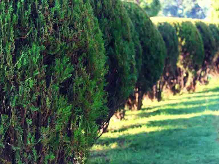 Tree Care Services Portland