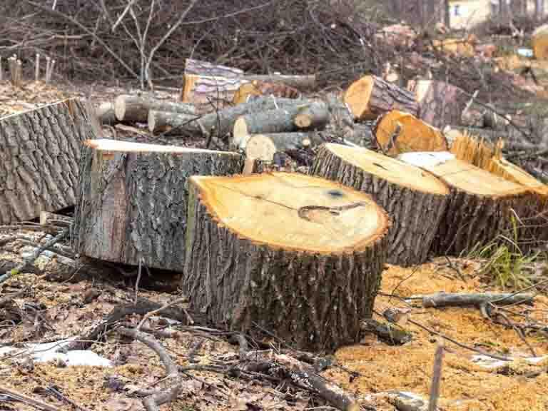 Tree Removal in Portland Oregon