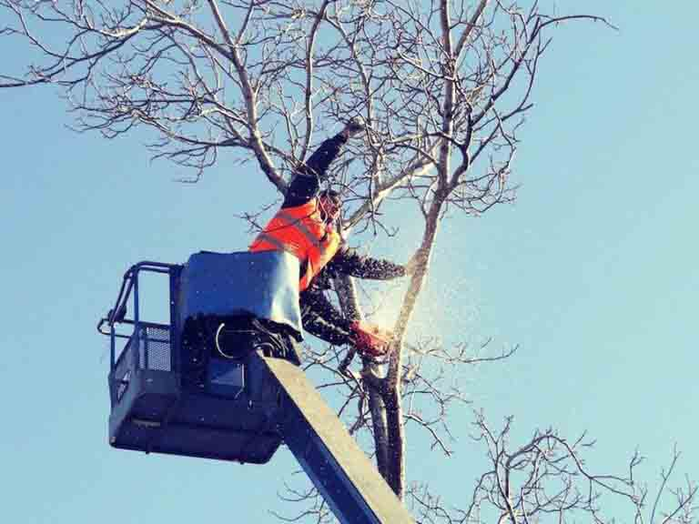 Tree Trimming Portland