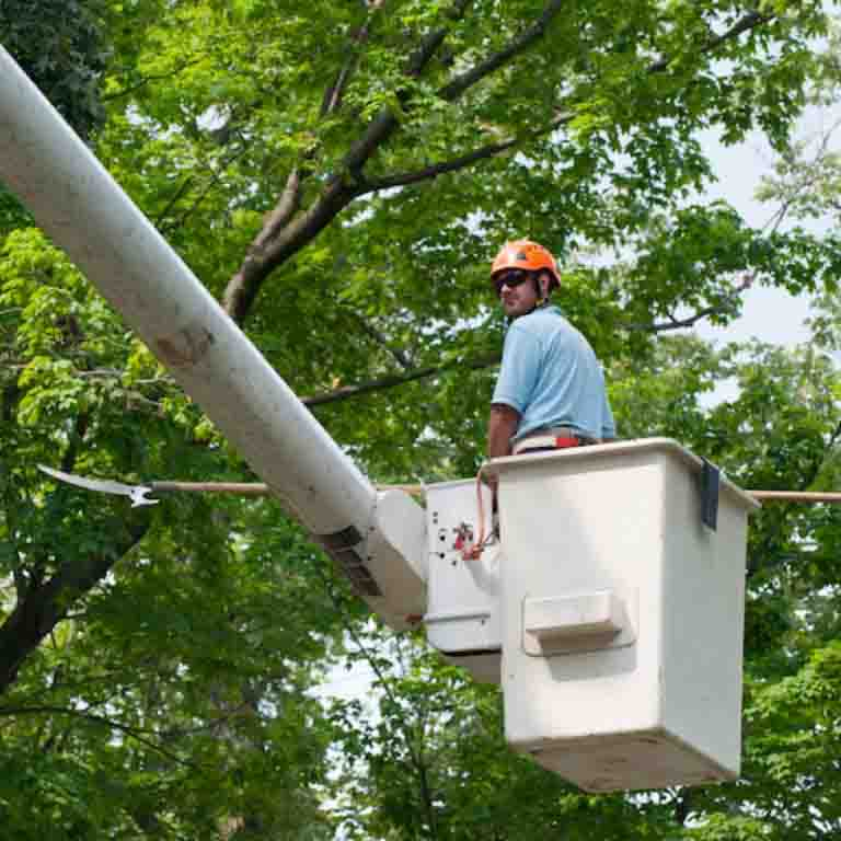 Tree Trimming, Care and Maintenance