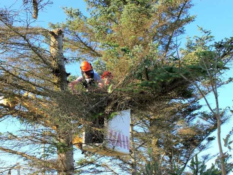 Tree Trimming & Thinning Portland Oregon